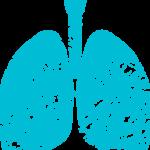 Mucoviscidose, mucus pulmonaire et poumons