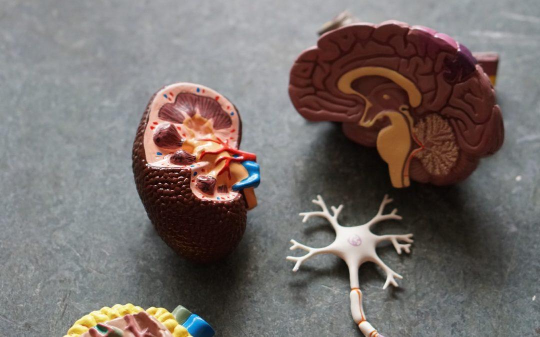Mucoviscidose et insuffisance pancréatique